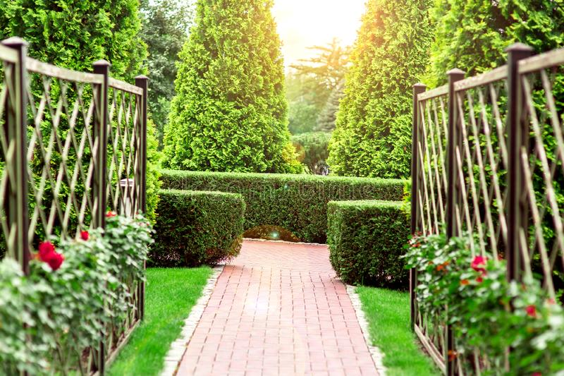 The rose garden with footpath a hedge of thuja. royalty free stock images