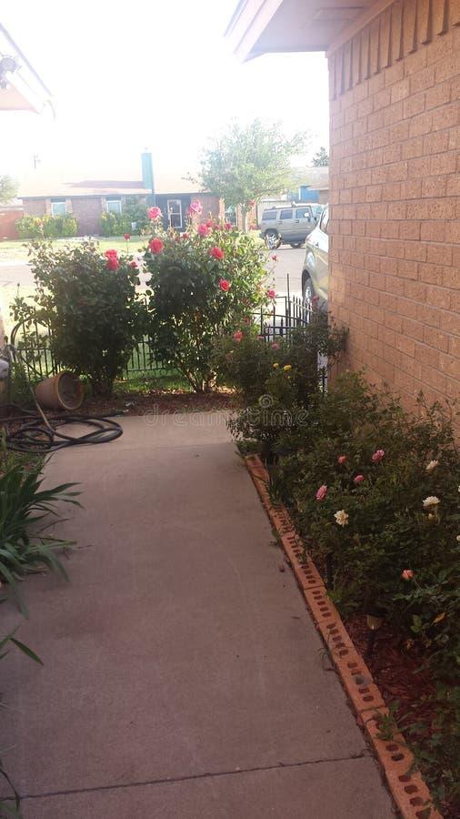 Rose Garden-gang royalty-vrije stock afbeelding
