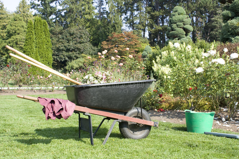 Rose garden and gardening tools royalty free stock images