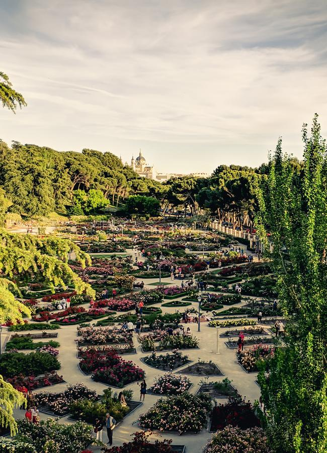 Rose garden park with the royal palace of Madrid stock images