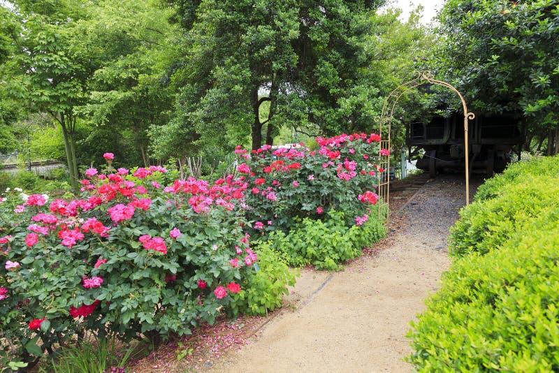 Rose Garden Path stockfoto