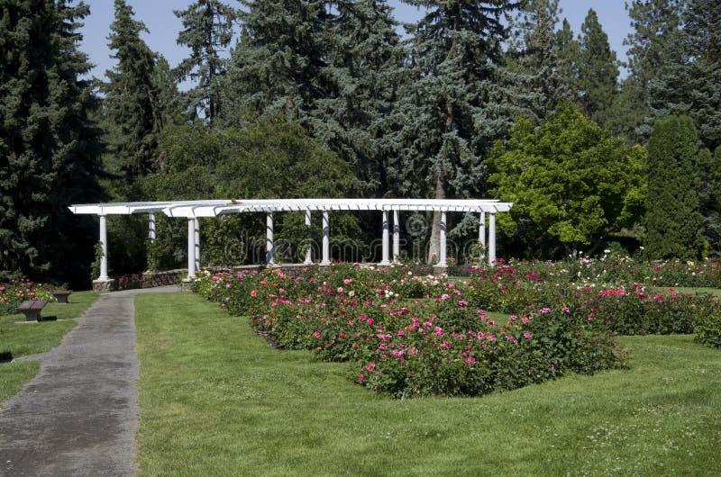 Rose garden Spokane stock image