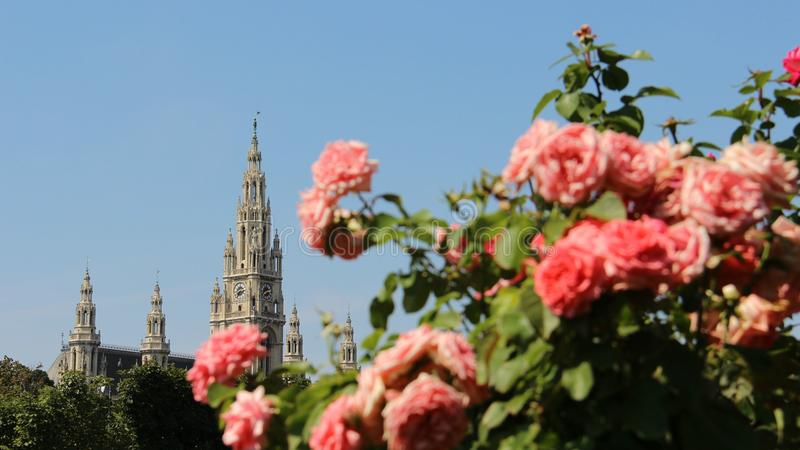 Rose Gardens And Historic buildings. City Hall In Vienna stock image