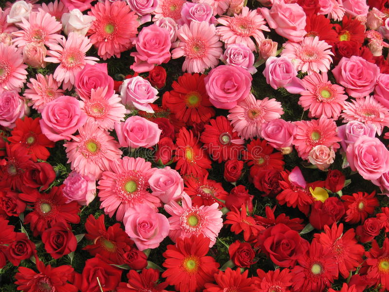 Rose & Gerber Daisy Bouquet stock photos