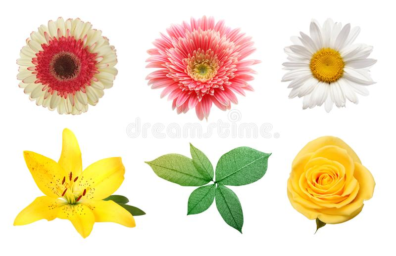Rose, gerbera, chamomile flower isolated on white. royalty free stock photo