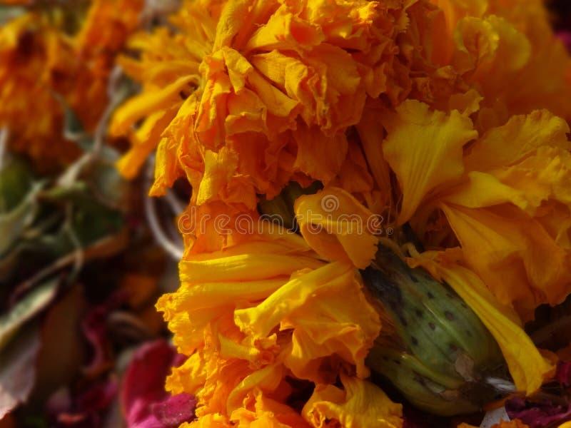 Rose gialle e gialle con i gambi fotografia stock libera da diritti