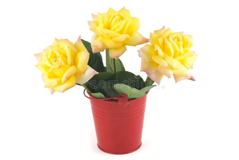 Rose gialle in una benna rossa fotografia stock libera da diritti