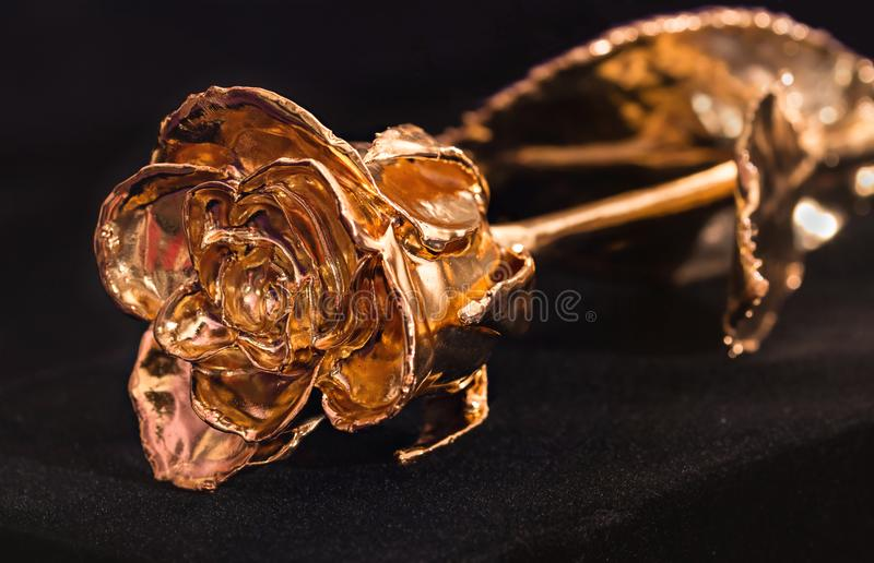 Rose Gold 24k royaltyfri bild