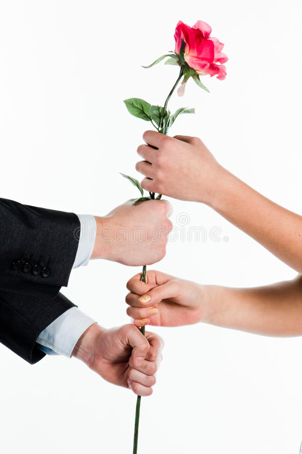 Download Rose in hands stock image. Image of male, affectionate - 23216449