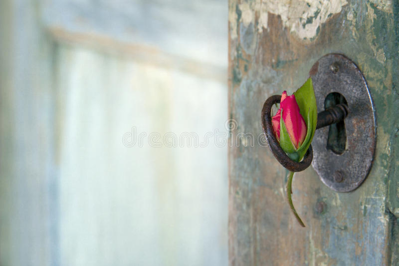 Rose hanging from an old key stock image