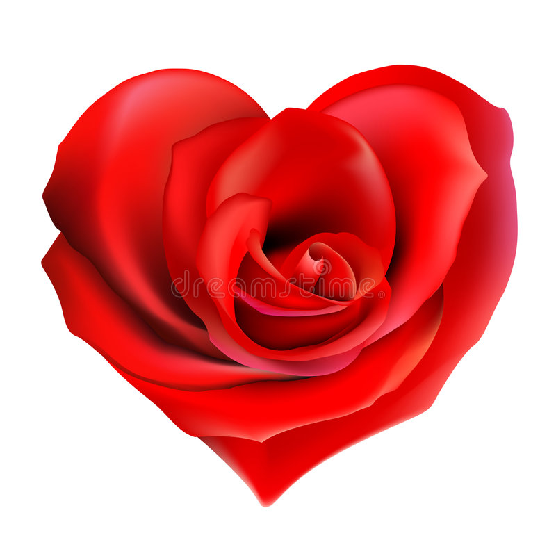 Rose_heart. Lovely heart shaped rose flower. Perfect for valentines day