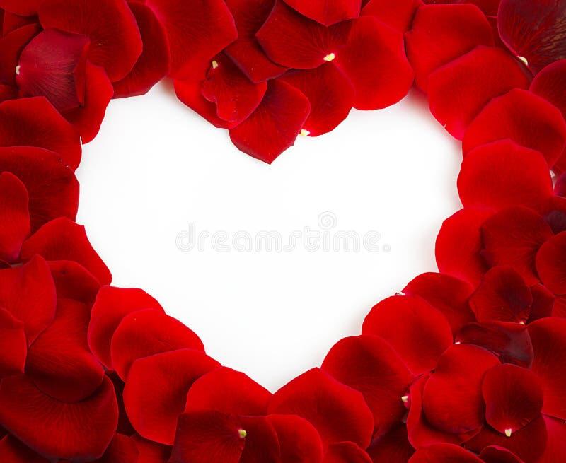 Rose Heart Shape roja con el espacio de la copia foto de archivo