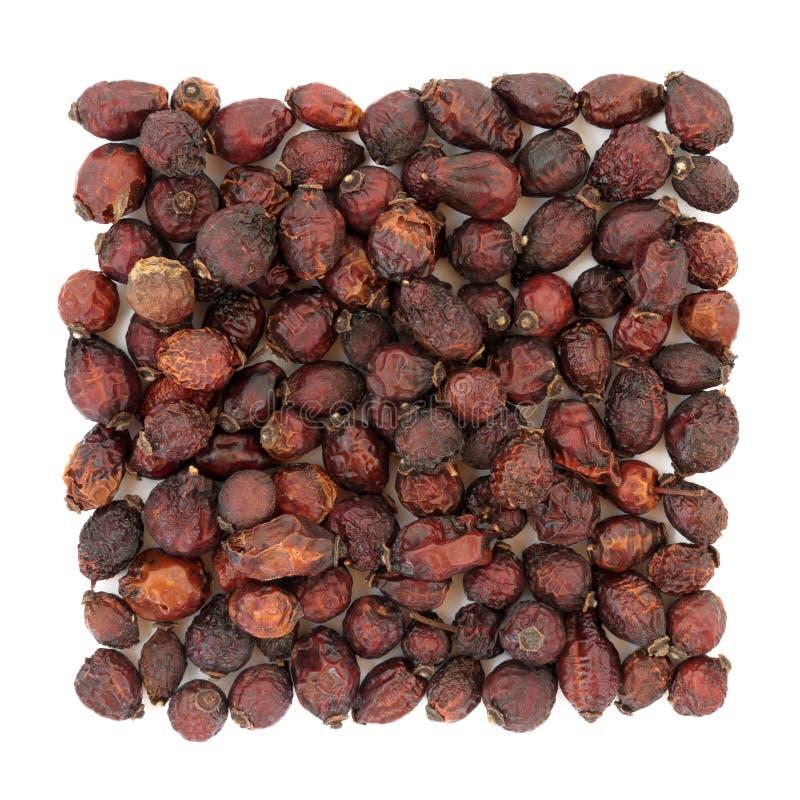 Rose Hip Herbal Medicine stock fotografie