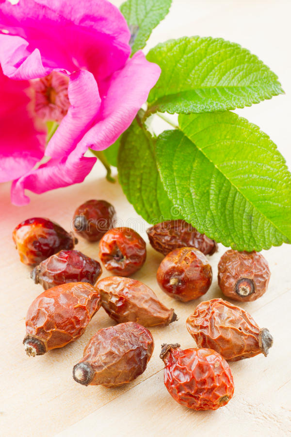 Download Rose Hips Berry And Rose-hip Flower Stock Photo - Image: 25231890