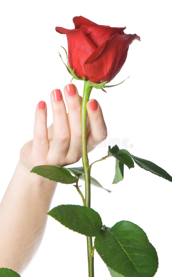 Free Rose In Hand Stock Image - 9027131
