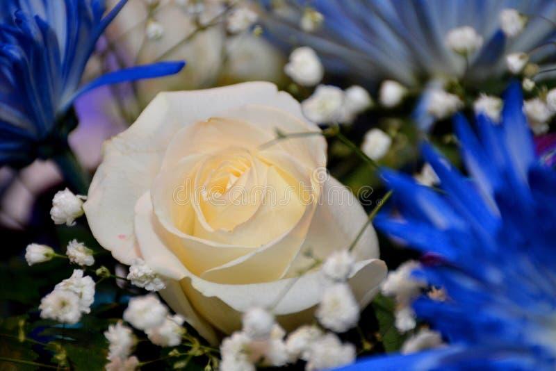 Rose jaune avec le fond brun photo stock