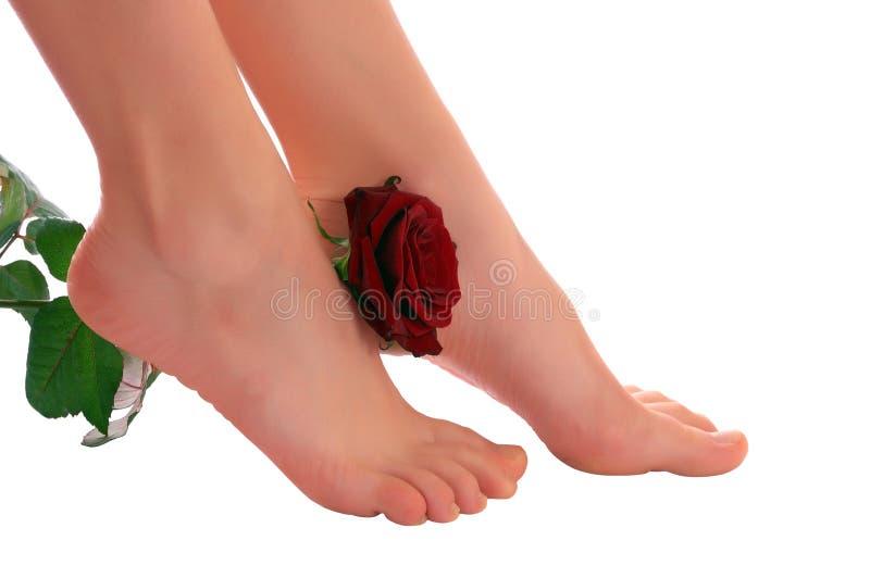 rose kvinna för ben royaltyfri bild