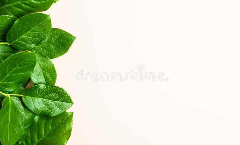 Rose leafs background stock image