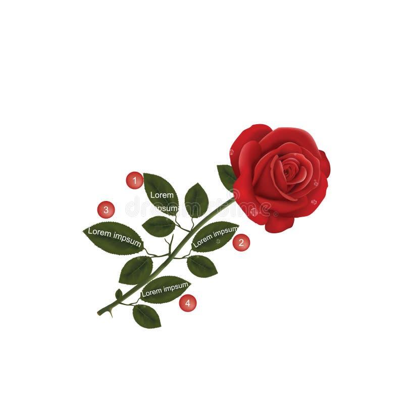 Rose Leafs - Textschablone vektor abbildung