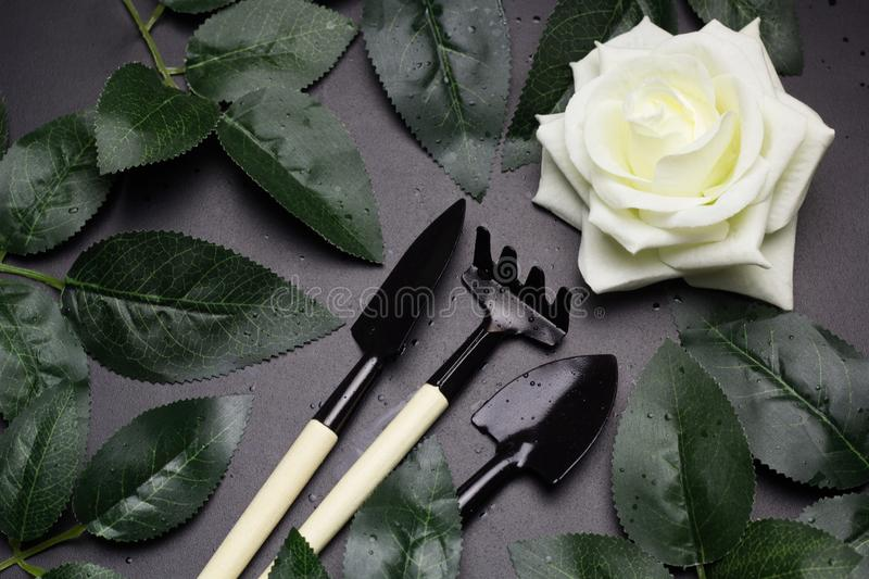 Rose leaves and garden tools frame, spring gardening concept royalty free stock images