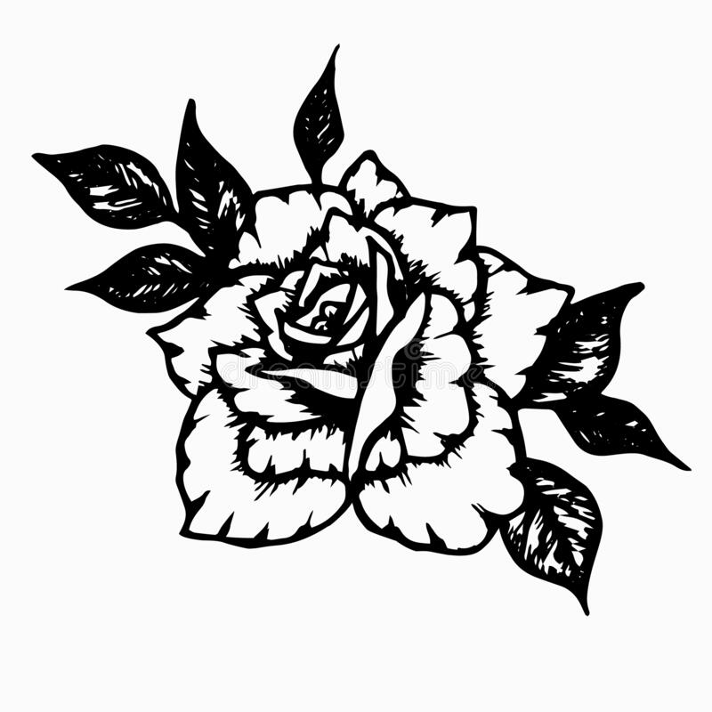 Flowers - Marshal P Wilder Rose Vintage Clipart Graphics By Enliven Designs  TheHungryJPEG.com #Rose,… in 2020 | Rose clipart, Floral illustrations,  Clipart black and white