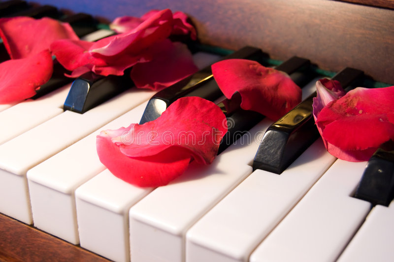Rose Leaves On The Piano Royalty Free Stock Images