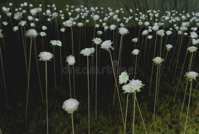 Rose light in Korea. stock image