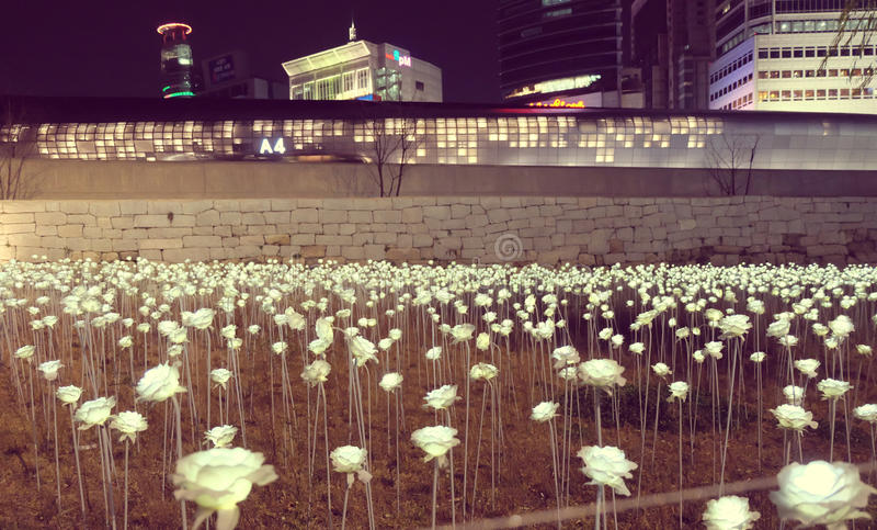 Rose light in Korea. royalty free stock photos