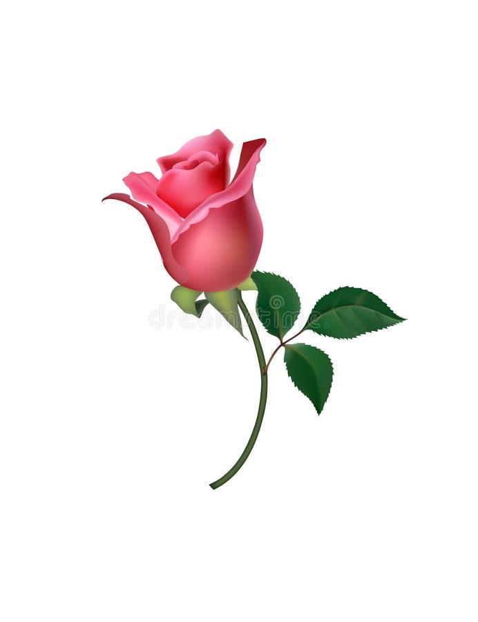 Rose Logo, immagine di vettore dei modelli dell'icona Vector il logo per web design, il cellulare e il infographics royalty illustrazione gratis