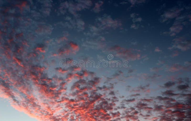 Rose magnifique et nuages pourpres contre le ciel bleu du lever de soleil de début de la matinée images libres de droits