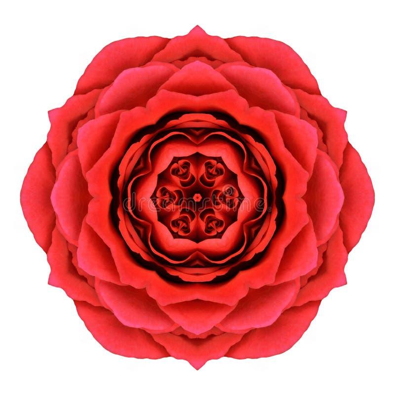 Rose Mandala Flower Kaleidoscopic Isolated roja en blanco fotografía de archivo libre de regalías