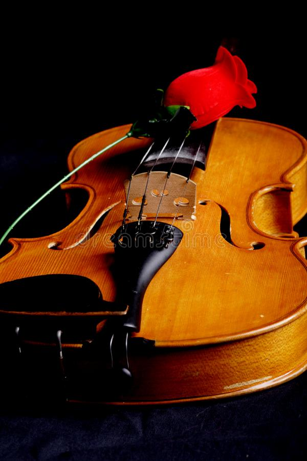 Rose melody stock photography