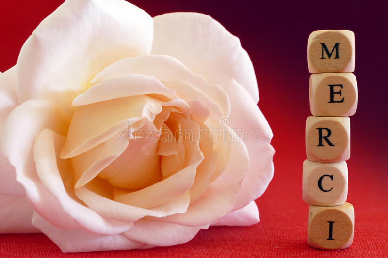 Rose and message Merci, french word, which means thanks, written stock photo