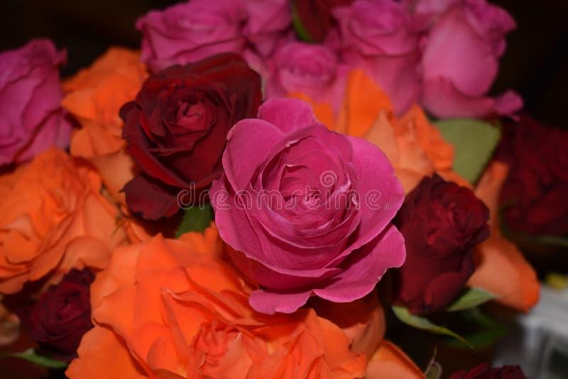 rose miłości obraz royalty free
