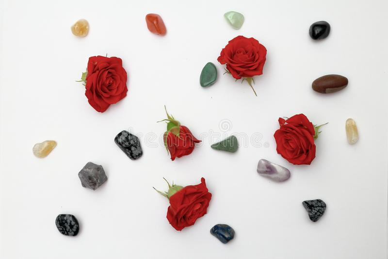 Rose in miniatura con ciottoli su fondo bianco fotografia stock