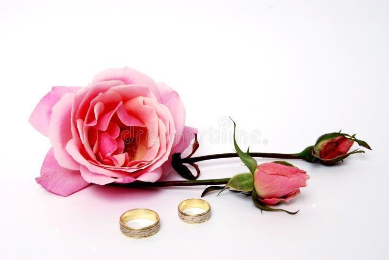 Rose mit Hochzeitsring lizenzfreie stockfotos