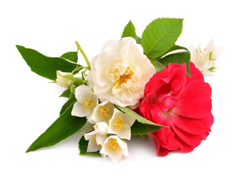 Rose mit Jasmin auf weißem Hintergrund lizenzfreie stockfotos