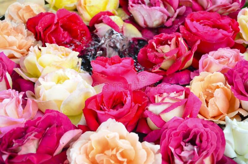 Rose mit wenigem Brunnen stockbild