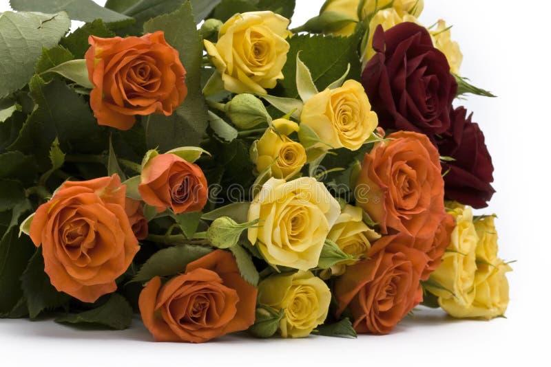 Download Rose multicolori fotografia stock. Immagine di romanzesco - 7303884