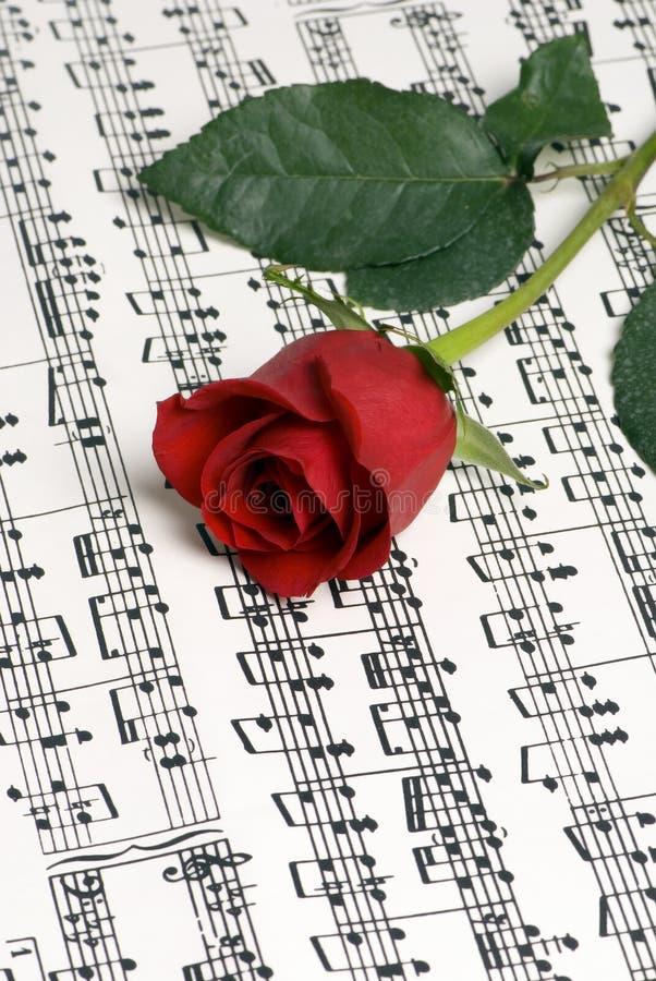 Rose Music 3 royalty free stock photo