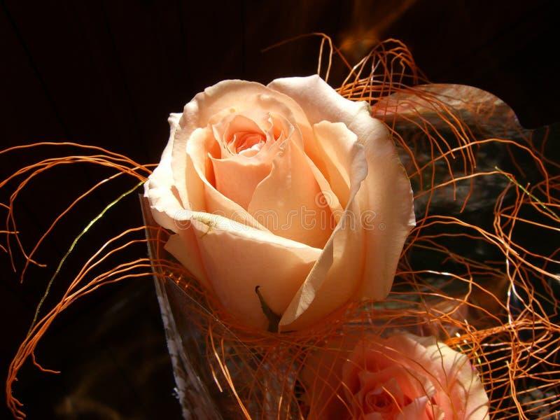 rose ofertę zdjęcia royalty free
