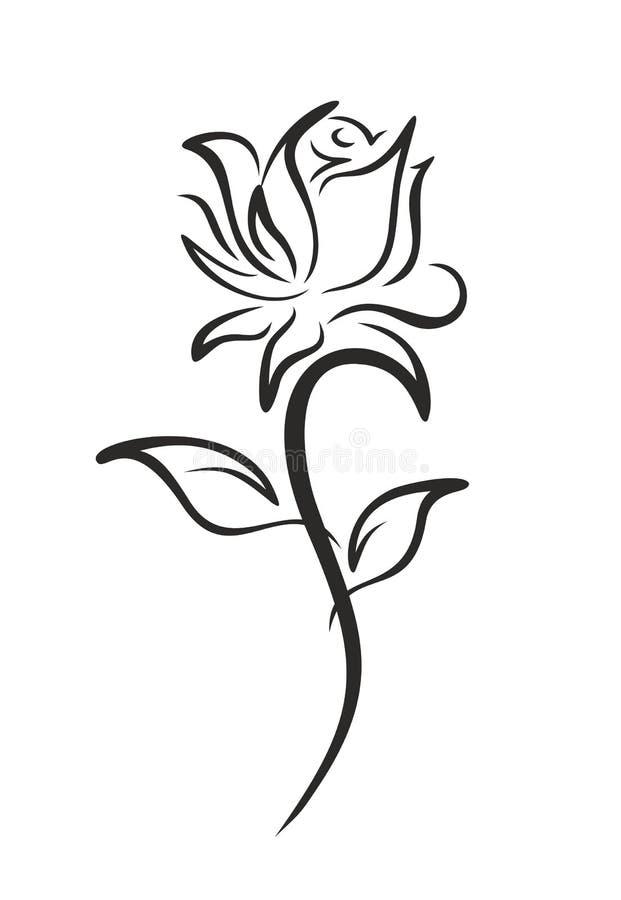 rose, ogród