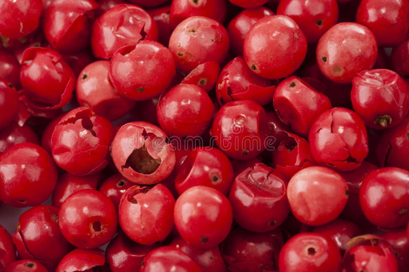 Rose Pepper rouge photo stock