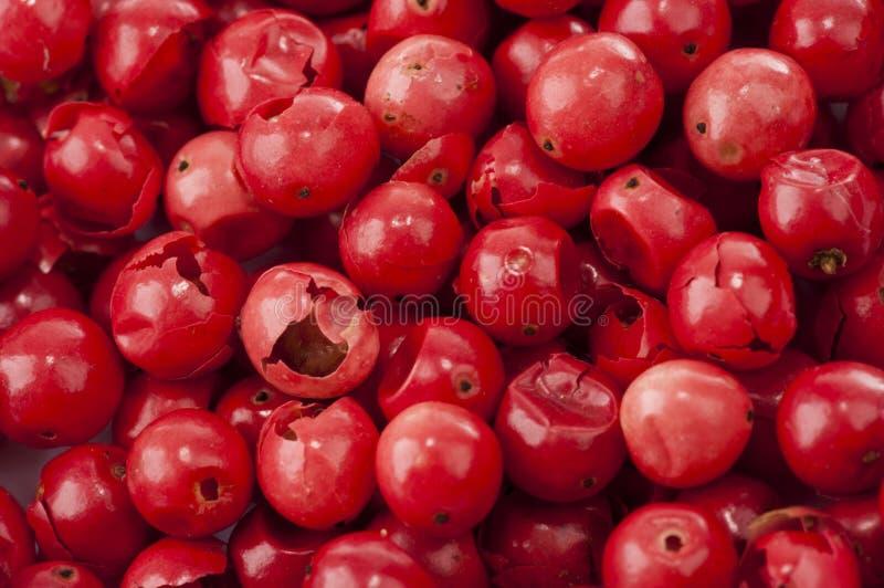 Rose Pepper vermelha foto de stock