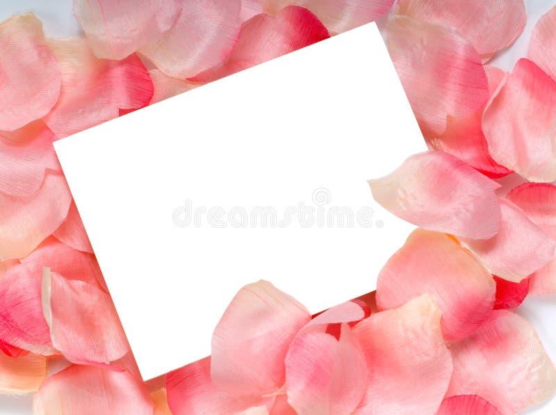 Rose Petal Notecard stock image
