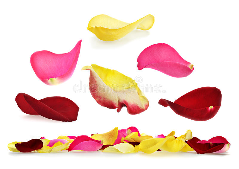 Rose Petal Set Stock Image