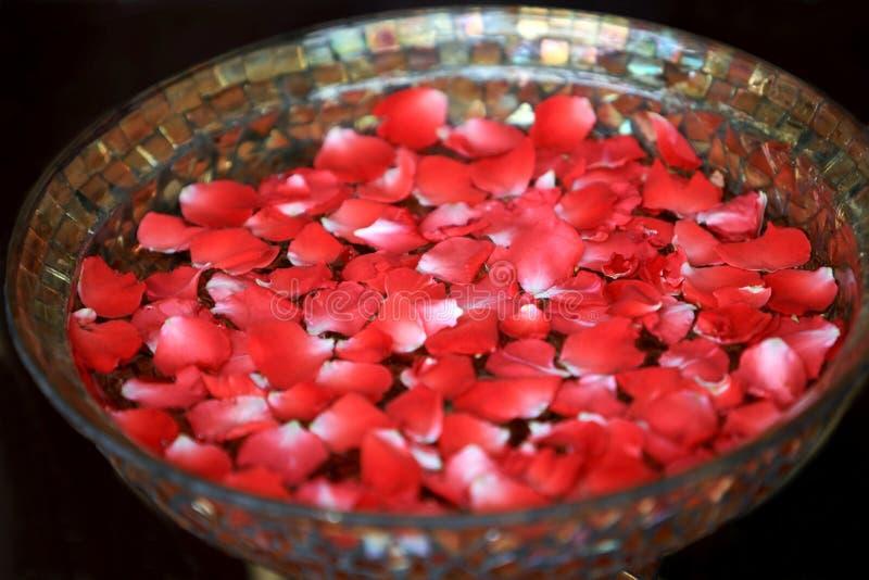 Rose Petal Spa. Preparing for rose petal spa stock image