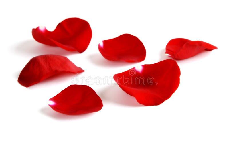 Download Rose Petals stock photo. Image of give, kindness, orange - 18272804