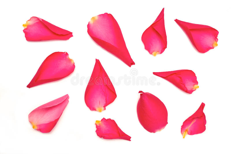 Rose Petals fotografia de stock royalty free