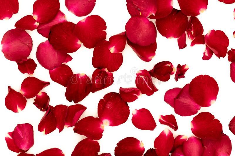 Rose petals arranged in a pattern stock photo